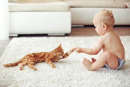No dangerous chemicals when cleaning your carpet, rug or upholstery in Mobile. Baby plays with kitten